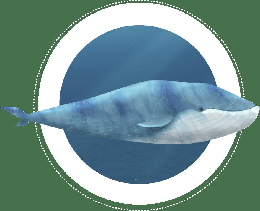 sea whale vector